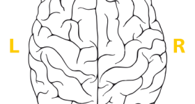 Right-brained? Left-brained? Take the Brain Test!