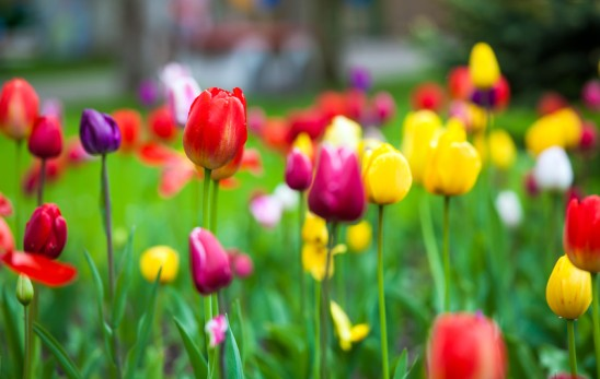 How to Recover From Workplace Spring Fever