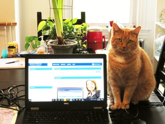 When Your Cat Is Your Coworker