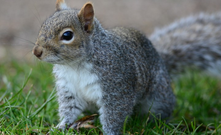 Squirrels Make Good Company