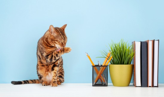 You Should Act Like a Cat at Work